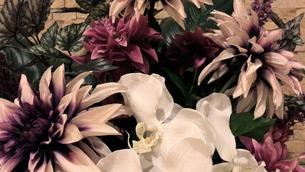 flower flower の写真素材 [FYI01205908]