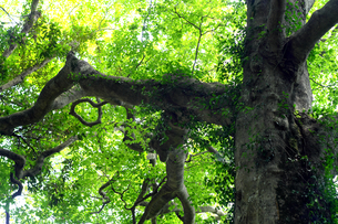 木の写真素材 [FYI01205912]