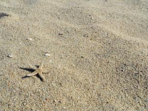 ヒトデが転がる綺麗な砂浜 - 12月 冬 昼間 日本 兵庫県 神戸市 -の写真素材 [FYI01205969]