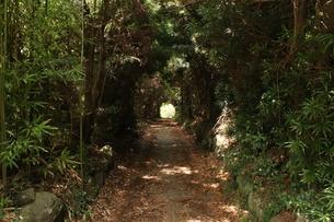 樹木のトンネルの写真素材 [FYI01206057]