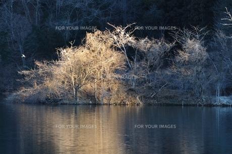 野鳥の棲家に朝日さしこむの写真素材 [FYI01206088]