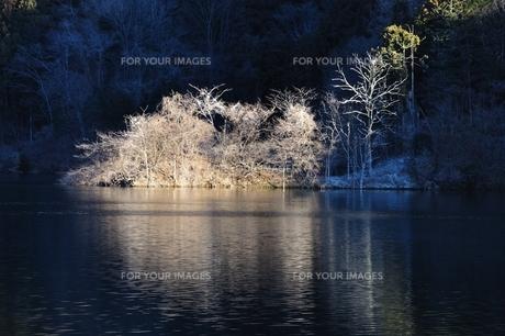 野鳥の棲家に朝日さしこむの写真素材 [FYI01206092]