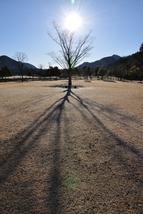冬陽の樹影の写真素材 [FYI01206093]