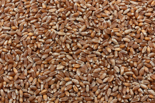 小麦、穀物の背景の写真素材 [FYI01206167]