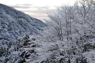 夜明け前の雪山の写真素材 [FYI01206252]