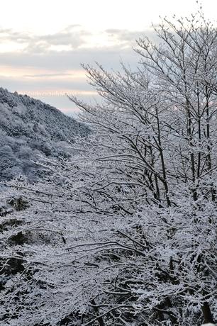夜明け前の雪山の写真素材 [FYI01206253]