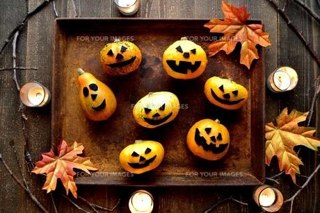 ハロウィンのかぼちゃと錆びたトレーの写真素材 [FYI01206399]