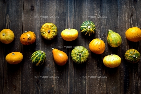 カラフルなかぼちゃ 黒木材背景の写真素材 [FYI01206403]