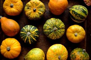 カラフルなかぼちゃの写真素材 [FYI01206412]