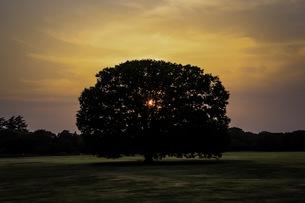 木の魂の写真素材 [FYI01206525]