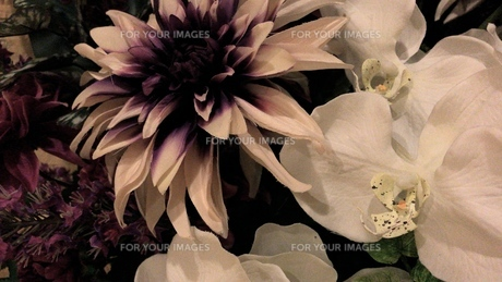 flower flower 2の写真素材 [FYI01206543]
