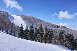 スキー場の写真素材 [FYI01206672]