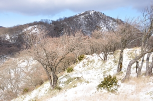冬の塔ノ岳の写真素材 [FYI01206718]