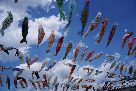 空を泳ぐ鯉のぼりの写真素材 [FYI01206950]