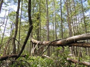 倒木の写真素材 [FYI01207153]