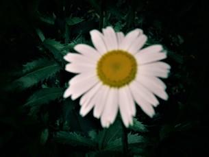 梅雨の晴れ間の写真素材 [FYI01207177]