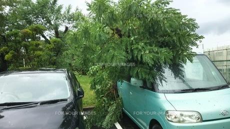 台風21号で車に被さる樹木の写真素材 [FYI01207313]