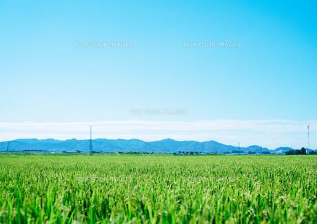 田園風景と青空の写真素材 [FYI01207441]