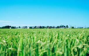 田園風景と青空の写真素材 [FYI01207442]