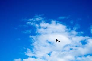青空を舞う鳥の写真素材 [FYI01207598]