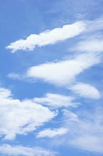 秋の風景の背景素材 ・ 青空と白い雲の写真素材 [FYI01207714]