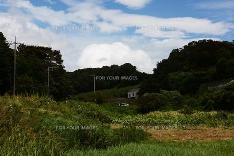 秋の風景の背景素材 ・ 青空と白い雲の写真素材 [FYI01207721]