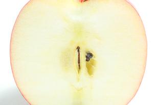 リンゴの断面 白色背景の写真素材 [FYI01207770]