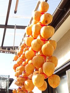 干し柿(ビニールひも使用)の写真素材 [FYI01207970]