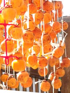 干し柿(ビニールひも使用)の写真素材 [FYI01207971]