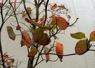 秋の写真素材 [FYI01208043]