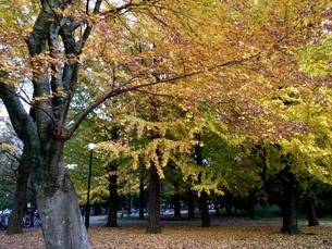 秋 〜autumn〜の写真素材 [FYI01208044]