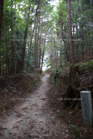 山の辺の道の風景の写真素材 [FYI01208115]