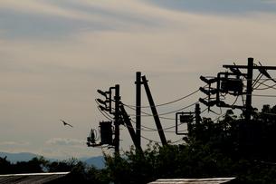夕暮れ時の空を飛ぶ鳶と電柱のシルエットの写真素材 [FYI01208306]