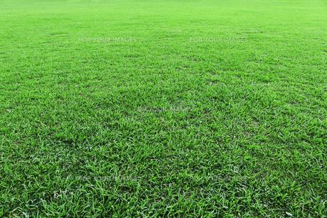 美しい緑の芝生の写真素材 [FYI01208323]