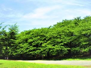 大きな自然の森の写真素材 [FYI01208342]
