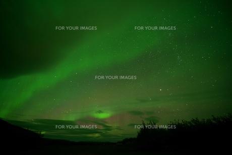 カナダ・ホワイトホースのオーロラの写真素材 [FYI01208457]