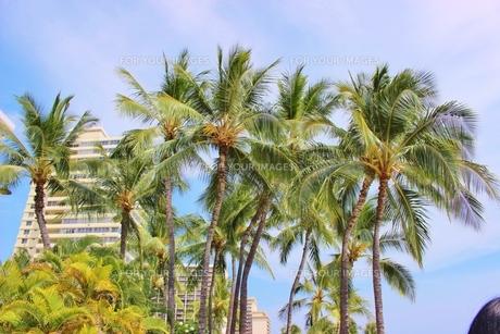 ハワイ ワイキキの浜辺通りのホテルの写真素材 [FYI01208520]