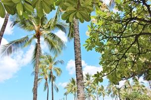 ハワイ ワイキキの浜辺の写真素材 [FYI01208524]