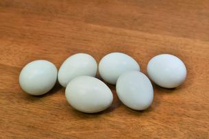 青い卵の写真素材 [FYI01208531]