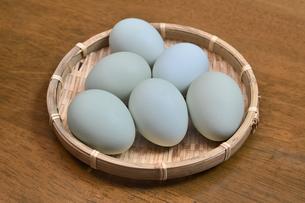 青い卵の写真素材 [FYI01208532]