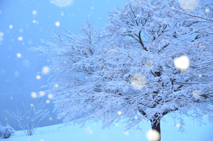 降り積もる雪の写真素材 [FYI01208652]