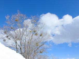 雪山に立つ木々の写真素材 [FYI01208657]