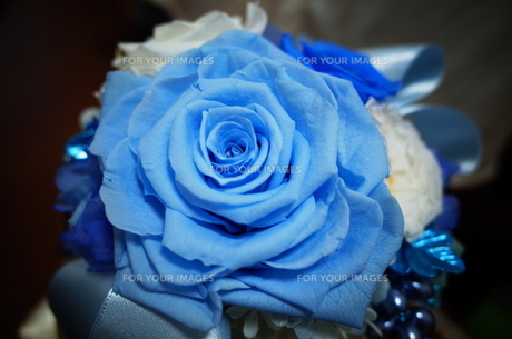 青いバラのプリザーブドフラワーの写真素材 [FYI01209012]