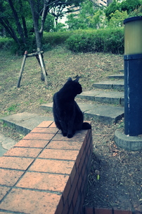 横を向く黒猫の写真素材 [FYI01209098]