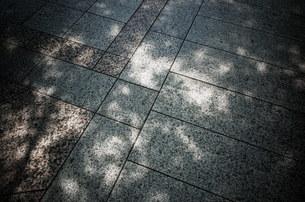 木漏れ日と石畳の写真素材 [FYI01209108]