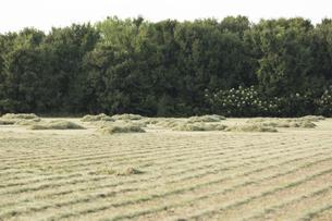 草原 草刈り後の写真素材 [FYI01209445]