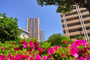 武蔵小杉の高層マンションの写真素材 [FYI01209463]