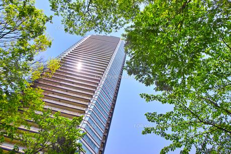 武蔵小杉の高層マンションの写真素材 [FYI01209471]
