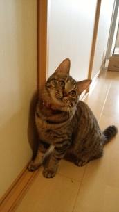 愛らしい猫ちゃんの写真素材 [FYI01209494]