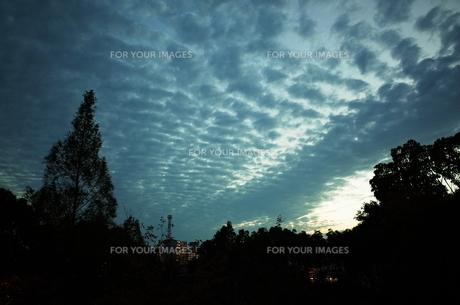 うろこ雲と西の空の写真素材 [FYI01209634]